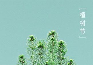 今天是植树节的唯美短句2020 植树节的美好说说祝福语2020