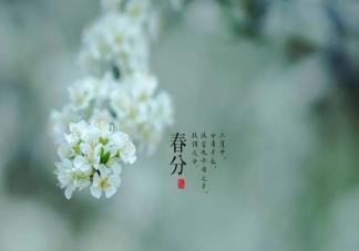 2020春分节气文案祝福语 春分唯美祝福语一句话句子