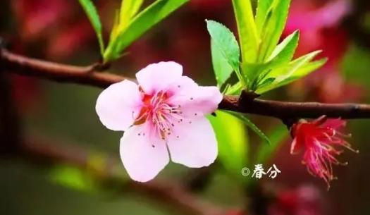 关于春分的谚语有哪些 春分谚语大全