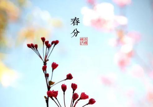 2020春分节气早安问候语 今日春分早安心语