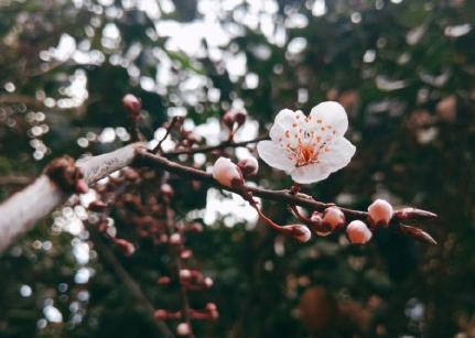 2020今日春分怎么发朋友圈 今日春分节气心情感慨