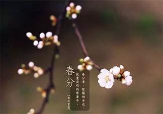 春分节气微信祝福语精选2020 春分节气一句话语录节选2020