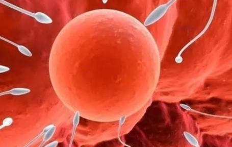 精子畸形会造成胎儿畸形吗 精子畸形率高怎么办