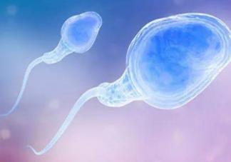 精子畸形率高是什么原因 精子畸形率高怎么办