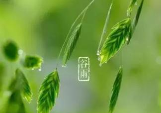 2020谷雨养生适合吃什么食物  谷雨节气如何养生
