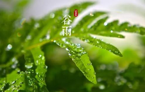 2020谷雨是几月几日 谷雨是几点几分