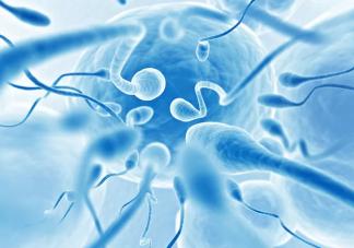 男性精子质量检查包含哪几项 男人备孕怎样提升精子质量