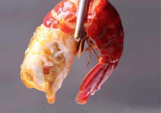 小龙虾壳是什么垃圾 小龙虾壳是软的是不是不新鲜
