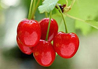2020立夏节气吃什么水果 适合立夏节气吃的水果有哪些