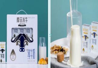 摩菲水牛奶是水牛产的奶吗  摩菲水牛纯牛奶好不好好不好