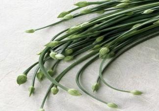 吃韭菜可以壮阳是真的吗 吃韭菜有什么好处