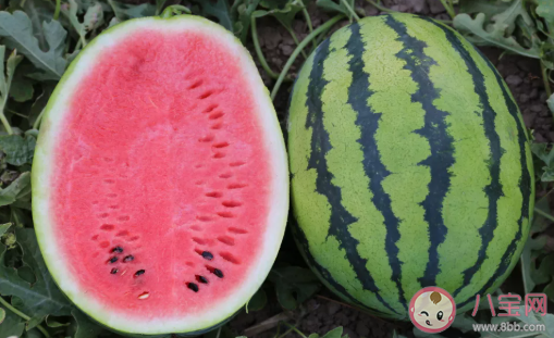 适合孩子夏季吃的金牌水果 夏天吃什么水果好