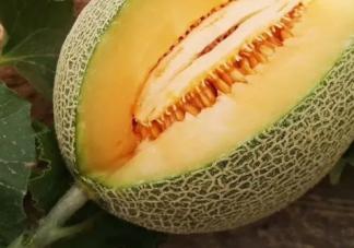孕妇吃哈密瓜有什么好处 孕妇怎么吃哈密瓜不发胖
