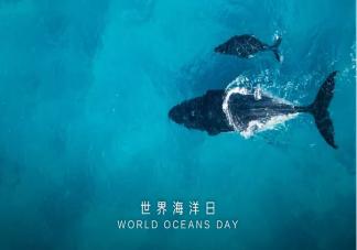 2020世界海洋日主题是什么 世界海洋日主题内容