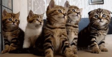五只小猫摇头表情包动图 无价之姐主题曲摇头表情包