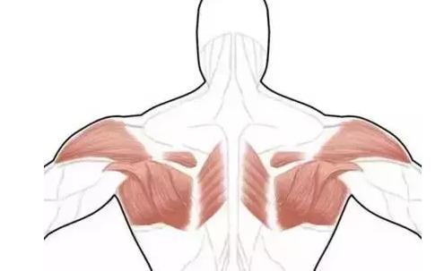 女性怎么改善圆肩驼背 改善圆肩驼背的几个动作