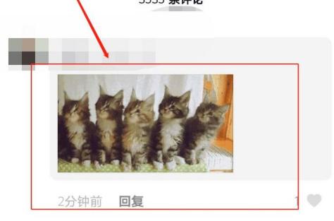 抖音五只猫摇头表情包动图 五只猫点头表情包怎么发