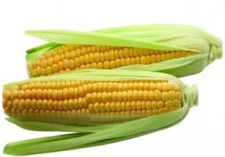 玉米热量高为什么还减肥 晚上吃玉米会胖