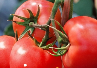 负卡路里食物可以提高新陈代谢吗?这样的食物存在吗