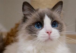 养猫前后的长辈有什么变化 长辈养猫前后有哪些改变