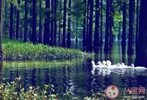 2020夏天湖北去哪里避暑好 湖北夏天旅游景点推荐