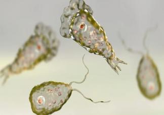 食脑虫有多可怕 食脑虫致死率有多高