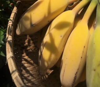 苹果蕉和香蕉营养有什么区别 苹果蕉有什么营养