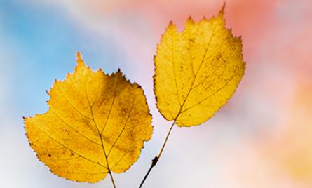 立秋后适宜吃什么养生 立秋后吃什么蔬菜养生
