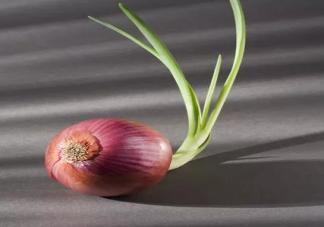 吃洋葱可以降血压是真的吗 经常吃洋葱有什么好处
