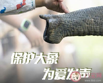 2020世界大象日是哪一天 世界大象日的由来故事