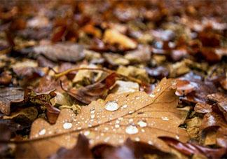 一场秋雨一场寒的经典朋友圈文案说说 一场秋雨一场寒的感想发朋友圈句子