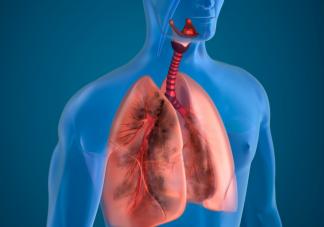 秋天肺部最怕什么 秋天应该如何保养肺部2020