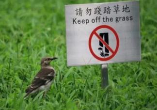 内蒙古培养耐踩草坪是怎么回事 耐踩草坪不会对草原植被有影响吗