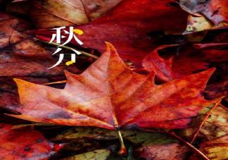今日秋分早安朋友圈文案句子大全 秋分早安正能量唯美句子