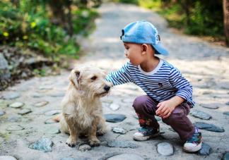 家庭宠物死亡会给孩子心理造成问题吗 宠物死亡对孩子有什么影响