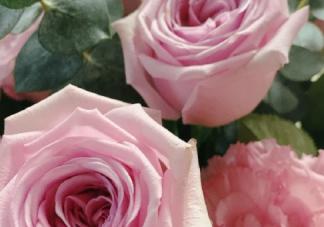养的花终于开花了的幽默说说 养的花终于开了朋友圈配文