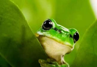 在夏天青蛙为什么会呱呱呱地叫个不停 支付宝蚂蚁庄园小鸡课堂9月28日最新答案