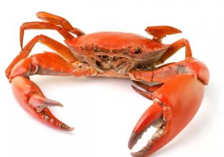 螃蟹死了之后还能吃吗 死螃蟹吃了会怎么样