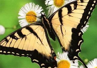 蚂蚁庄园小课堂10月12日答案 蝴蝶辨别食物味道用的是哪个身体部位