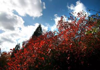 2020北京值得去赏红叶地点 北京赏红叶可以去哪些地方
