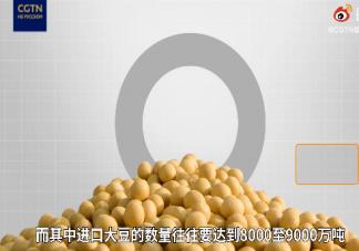 中国为什么需要进口大量大豆 食用大豆的大豆的营养价值作用是什么