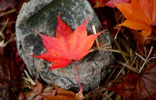 秋天的落叶怎么拍好看 落叶创意拍摄技巧分享
