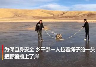 青海乡干部跳入冰湖救落水野狼是怎么回事 在野外遇见狼了怎么办