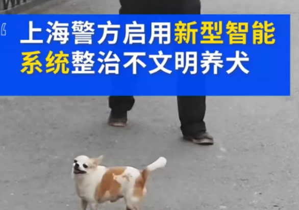上海不牵绳遛狗罚款多少钱 遛狗不牵狗绳有哪些处罚