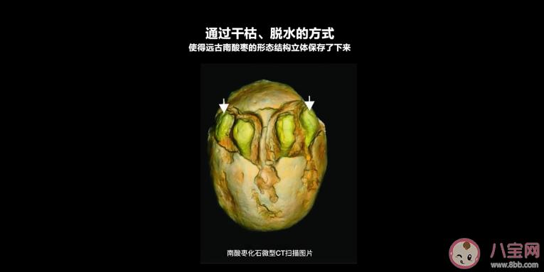 【皮看够】1500万年前的枣长什么样子 1500万年前的枣是怎么保存下来的