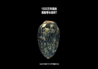 1500万年前的枣长什么样子 1500万年前的枣是怎么保存下来的