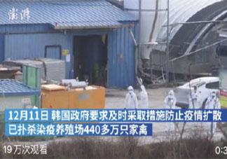 韩国扑杀440多万只家禽是怎么回事 禽流感应该如何预防
