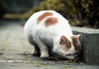 上海怎么预约流浪猫免费绝育手术 流浪动物预约免费绝育手术方法