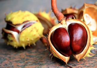 冬天吃栗子有什么好处 栗子食谱营养吃法