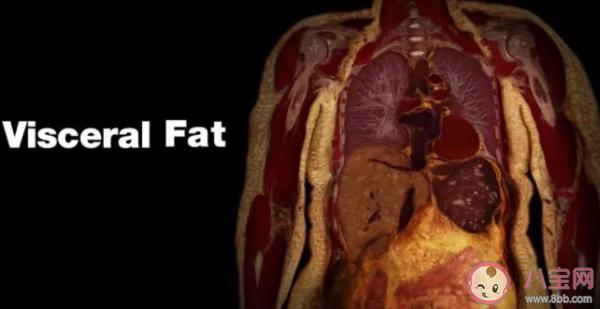 内脏脂肪怎么减最有效果 怎么快速消除内脏脂肪